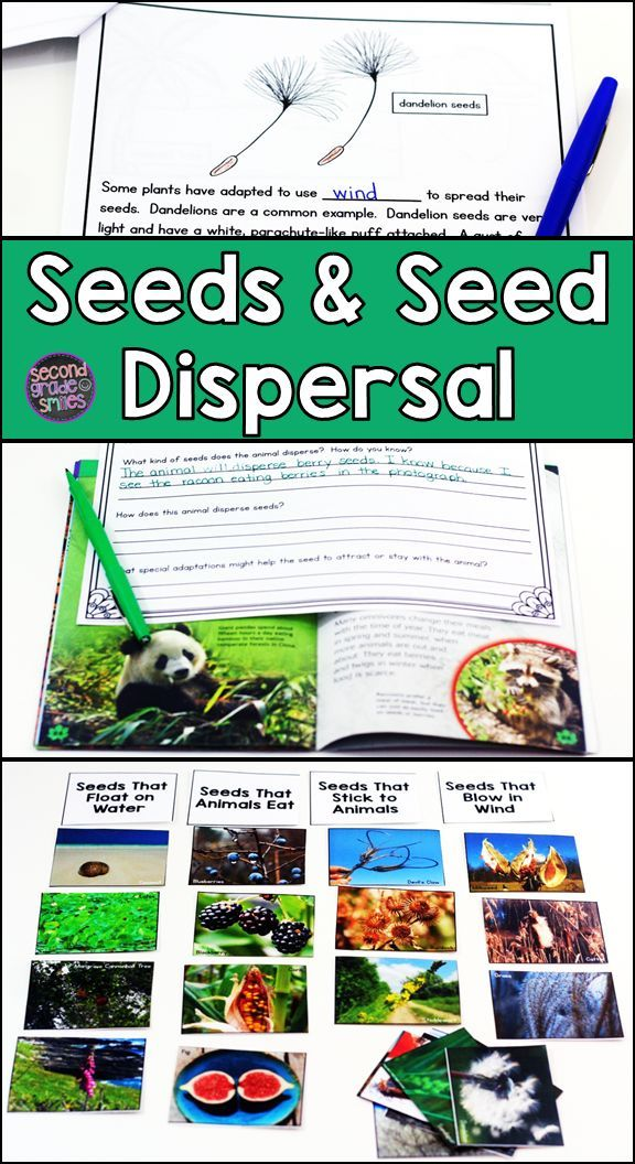 Teaching your kids about plant adaptations or seed dispersal? This science resource includes hands-on activities, an experiment, a PowerPoint, a student book, and more! I used it meet the NGSS.