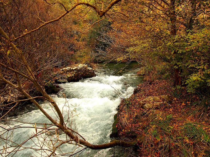 https://flic.kr/p/jsKbkB | Arcadia - Lousios River (2) | The Lousios  is a river and a gorge in western Arcadia that stretches from Karytaina north to Dimitsana in Greece.
