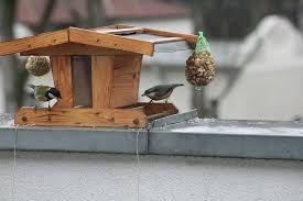 Resultado de imagen para comederos para aves caseros