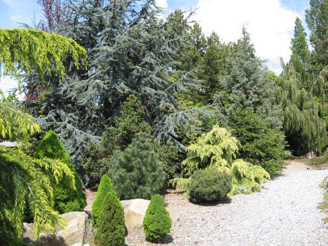17 Best images about Evergreen Shrub Gardens on Pinterest