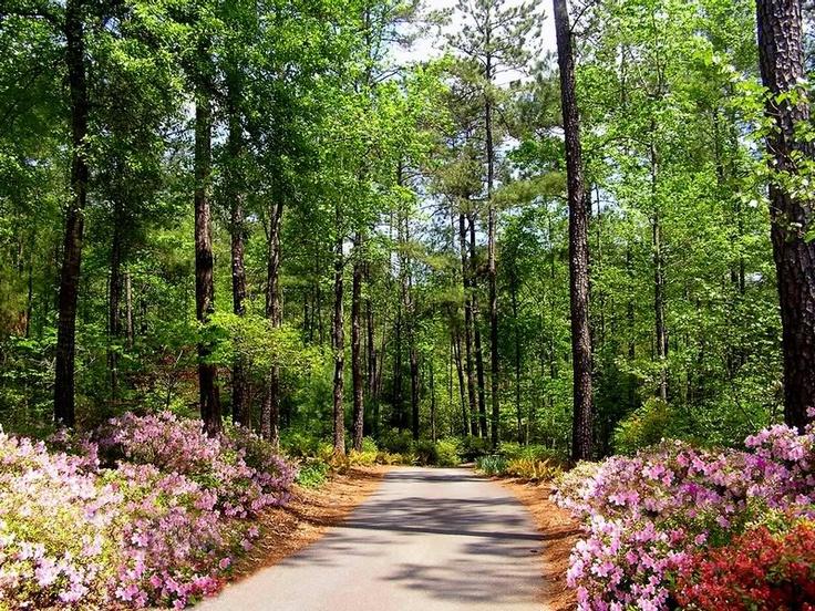 Azalea path callaway gardens georgia art charming for Callaway gardens fishing