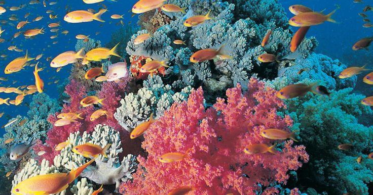 Los mejores arrecifes de coral en México. Los arrecifes de coral son ecosistemas ricos en especies marinas. La biodiversidad que se encuentra en ellos es muy importante para las industrias pesquera y alimentaria. México cuenta con arrecifes coralinos en el Océano Pacífico, el Golfo de México y en el Mar Caribe, frente a las costas de Yucatán, y es el segundo más grande del planeta, que se ...