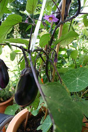 Cool Selbstversorger ohne eigenen Garten Kein Problem