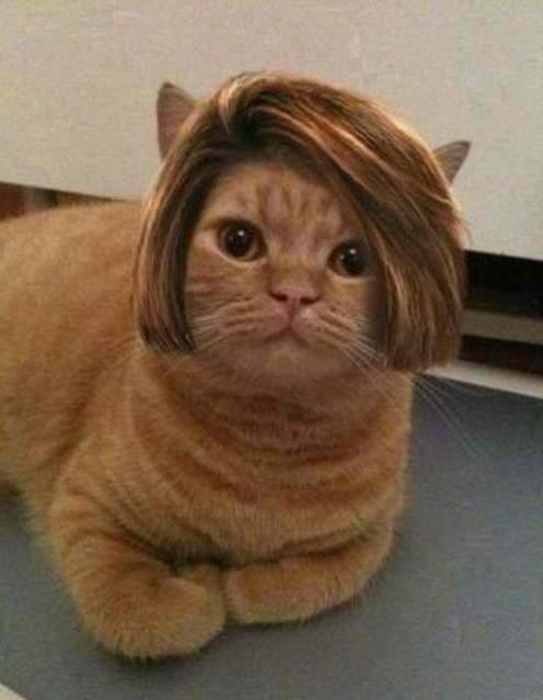 Bob-Cat! Hermoso corte de cabello.