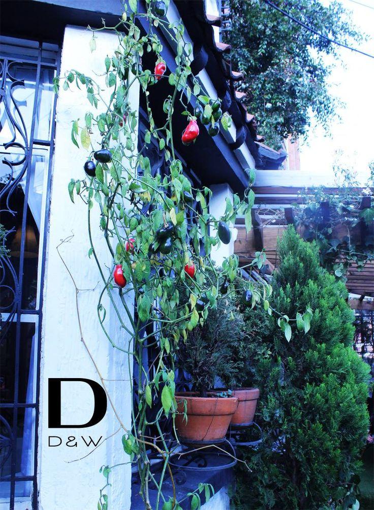 #Pimentones en la terraza de #SuTerceraCasa!! #Gardening https://www.pinterest.com/suterceracasa/ | Calle 73 #9-70 | Reservas: 2493404