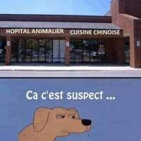 Images Même le chien à compris que c'est louche Images drôles Blagues en images sur Humour.com