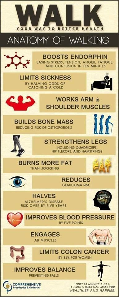 Walking anatomy, What can regular daily walking do to improve your life. #fitness #exercise
