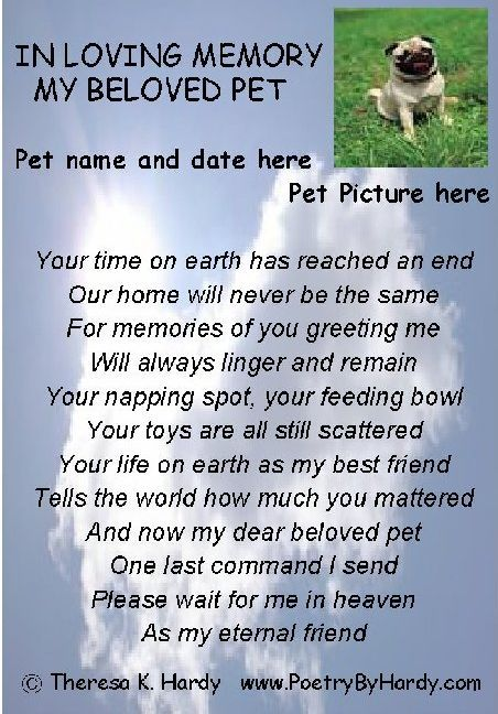 Grieving A Dog Losing A Pet