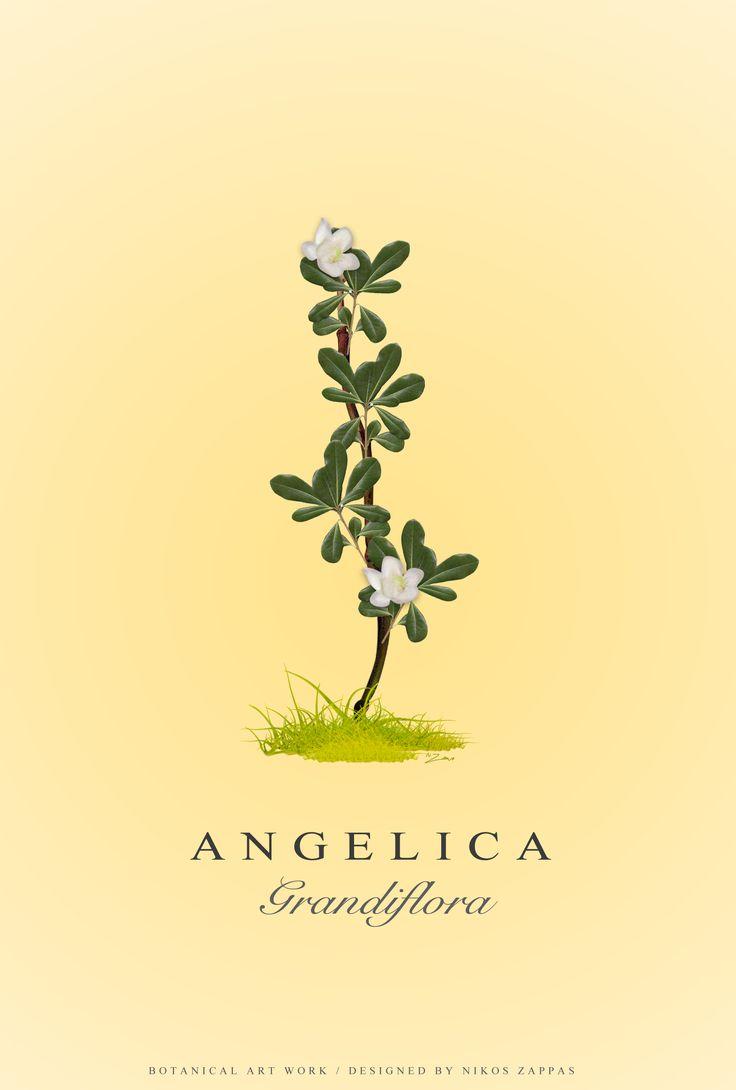 Botanical Art Work by Nikos Zappas ®