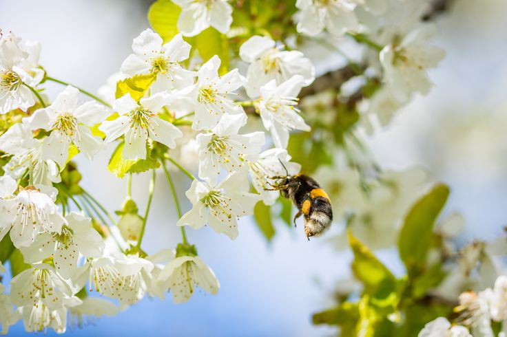 Do you want to make a difference? Take a look at some of the plants and flowers that you can place in your garden to attract more bees: