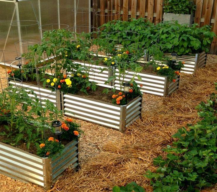 11 Best Veggie Garden Beds Images On Pinterest Raised Beds Backyard Ideas And Raised Gardens