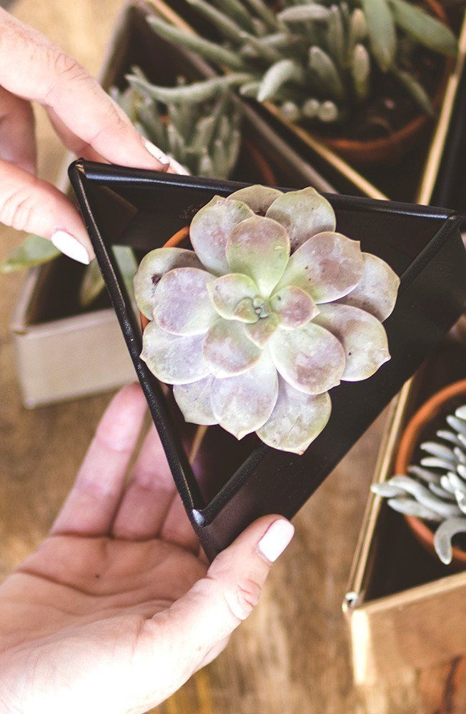 Beautify any home tabletop with a modern triangle planter filled with succulents. Find the DIY design inspiration and supply list here.