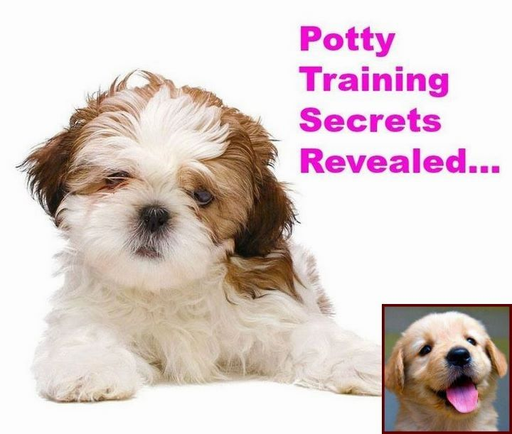 House Training A Puppy 6 Months Old And Dog Training Courses In