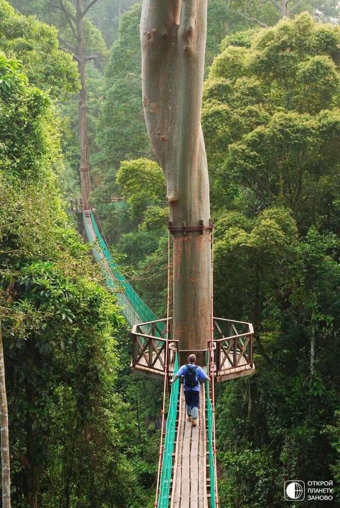 not sure where this is at, but would love to walk across this bridge :)  Прогулка по висячим мостам в джунглях острова Борнео, Филлипины. Борнео славится своими древними тропическими лесами.