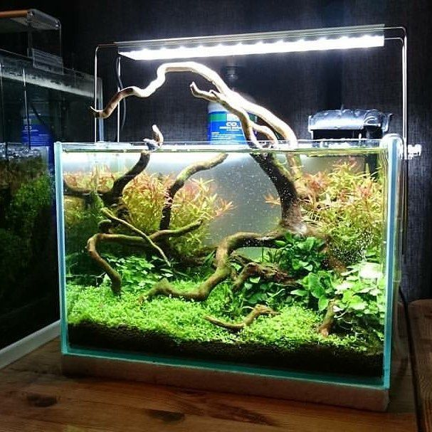121 Best Cube For Shrimp Images On Pinterest