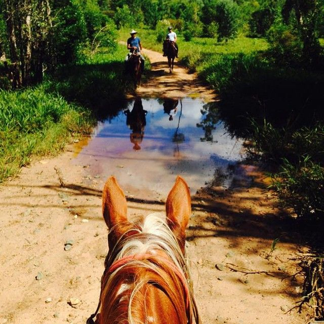 Horse riding through the Noosa Hinterland with Noosa Horses!