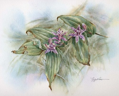Tricyrtis in the grass 2001
