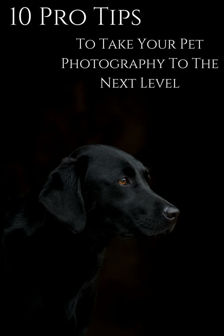 10 Tips To Take Your Pet Photography The Next Level Dog