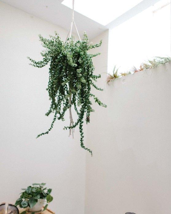 How to Make Modern Macrame Plant Hangers   Plant hanger ... - photo#31