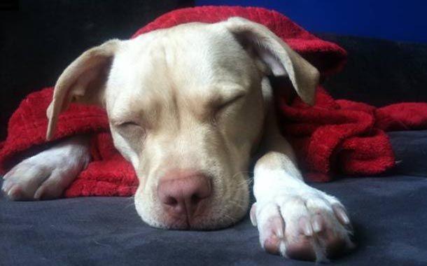 gripe em cães e gatos, gripe cães e gatos como evitar, gripe cães e gatos como prevenir, gripe cães e gatos tratamento, gripe cães e gatos causas, gripe cão