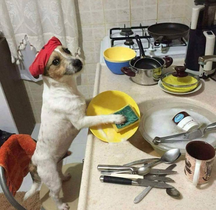 Wow. How much does this cutie charge per hour? :D #dog #dogs #funny #jrt #dishes