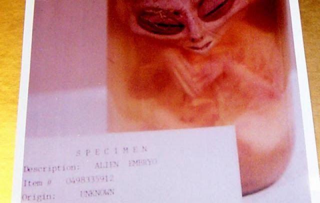 Câmera perdida de um ex-oficial militar americano revela imagem secreta de embrião extraterrestre - Sempre Questione