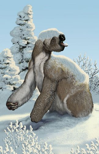 Megalonyx; Ground Sloth; Late Miocene to Pleistocene, 10.3–0.011; Mammalia (Xenarthra);Described by Harlan, 1825; Artwork by MaCarl Buell?