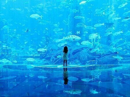 【ドバイ】アクアリウム & アンダーウォーターズー。2008年に開業した世界最大のショッピングモール「ドバイ・モール」にある水族館。ここの見所は、何と言ってもギネスに登録された世界一大きなアクリルパネルの水槽です。
