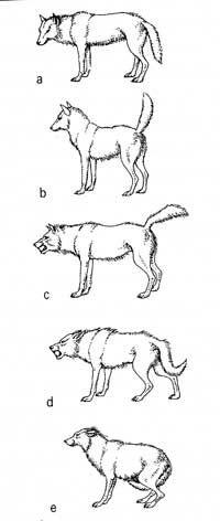 Honden gedrag