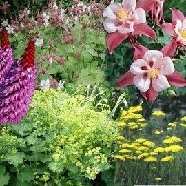 Assortiment : Vivaces pour jardin anglais