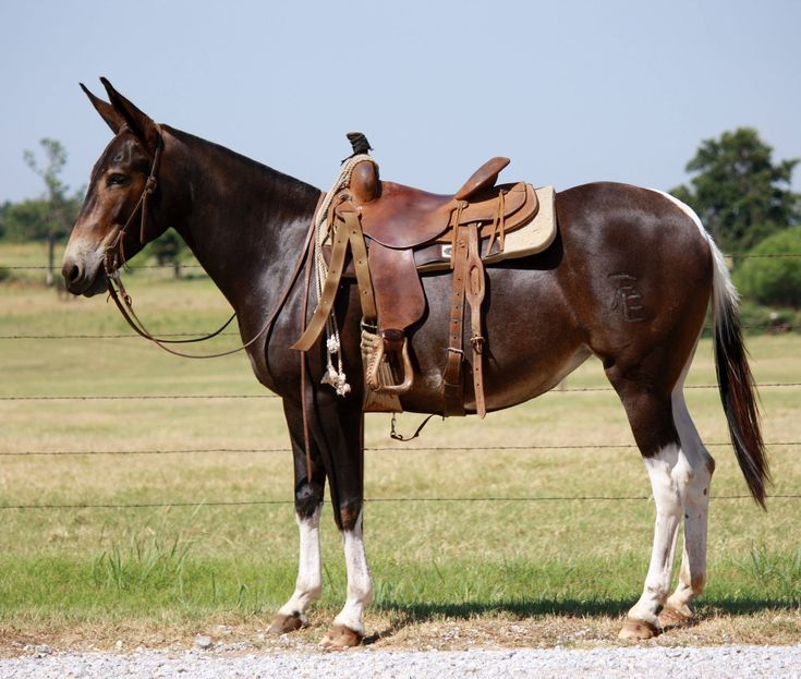 Used Draft Horse Shoes For Sale