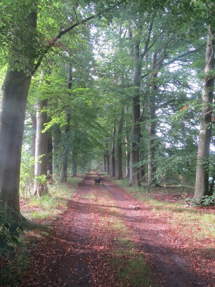 2014-09-28 Rondom landgoed Engelenburg loop je door mooie lanen met eiken en beuken