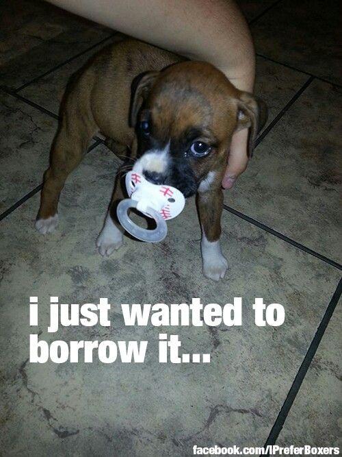 I can't even stand it!!!!  Sooooooooooooo cute!  What a precious little smooshie face!                                                                                                                                                                                 More