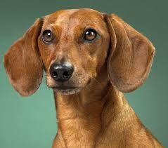 Resultado de imagen para ver fotos de perros