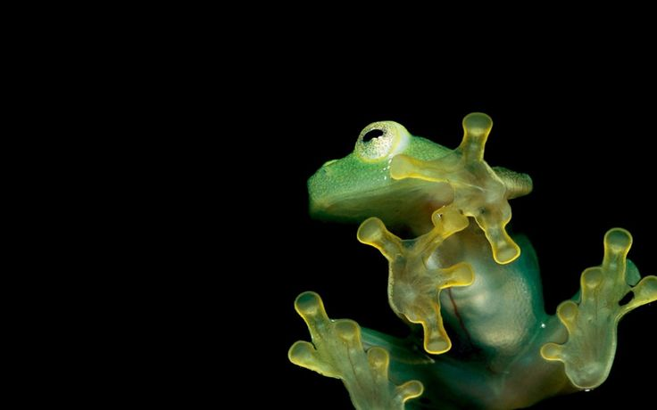 frog pic - Background hd, Elvis Walls 2017-03-08