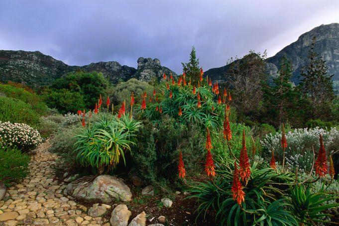 Kirstenbosch Botanical Gardens - Cape Town, South Africa