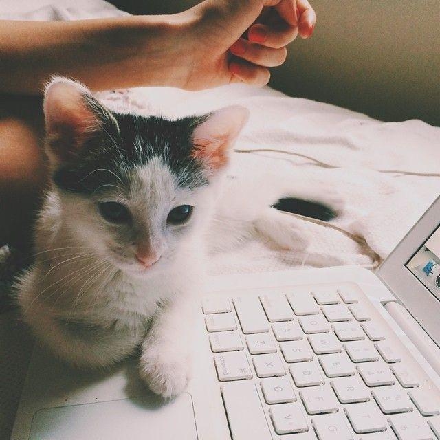 Cat & Computer #cat #friends #crueltyfree http://www.vainpursuits.com/