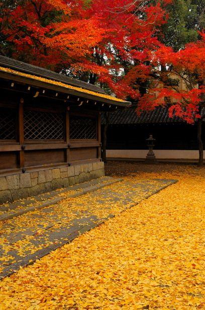 Autumn carpet at Goryo shrine, Kyoto, Japan 御霊神社 京都