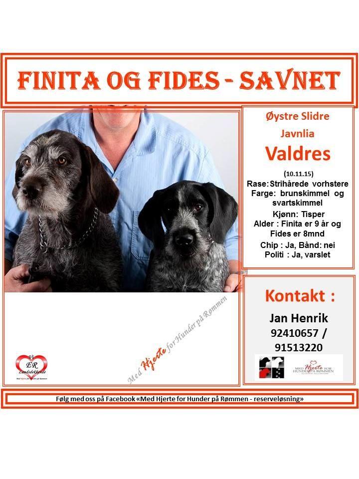 SAVNET : LINK TIL FB DELSIDE : https://www.facebook.com/hjertegruppa/photos/a.871879662838662.1073741828.773451359348160/1227862053907086/?type=3&theater LINK TIL HOVEDVEGG . #savnethund#Valdres#vortsteh#Medhjerteforhunderpårømmen