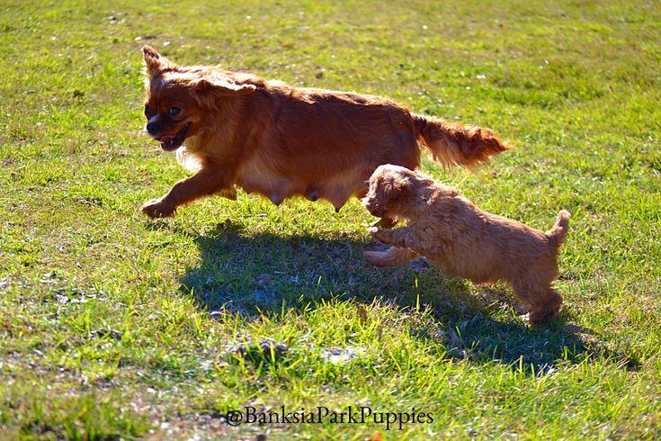 """Just you wait Mummy...I'll catch you!"" 🐶💜🐕"
