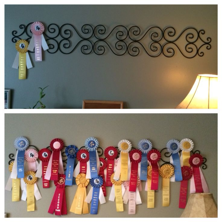 Horse ribbon display                                                                                                                                                                                 More