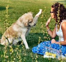 How Do I Train My Dog To Heal