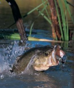 Buy Bass Fishing Rods Online