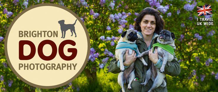 Dog Friendly Brighton Map   Brighton Dog Photography