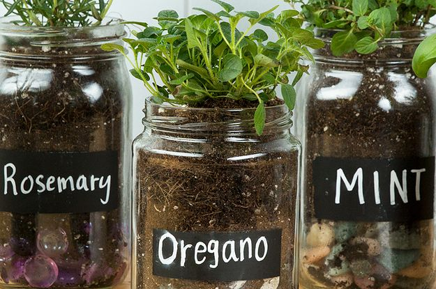 You Can Repurpose Glass Jars Into These Adorable Seed Starters - Buzzfeed Goodful