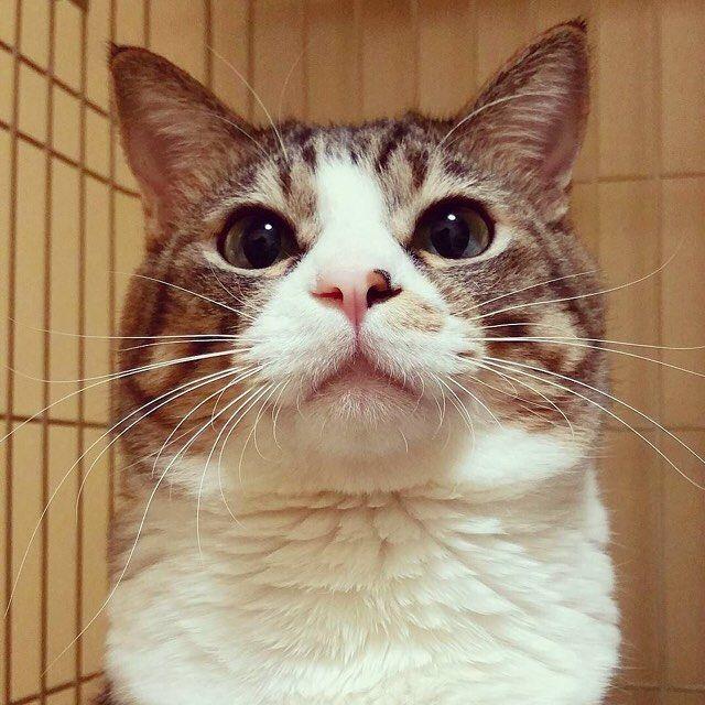 Photo ID #bestfriends #photoid #catstagram #gato #cat #instapets #catsofinstagram #catlover #instacats #happy #catlife #textgram #sexycurve #kitty #pose #lifestyle