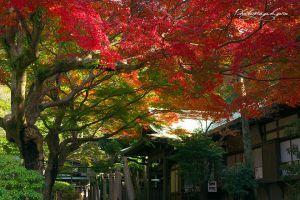 kamakura#鎌倉#鎌倉宮#紅葉#