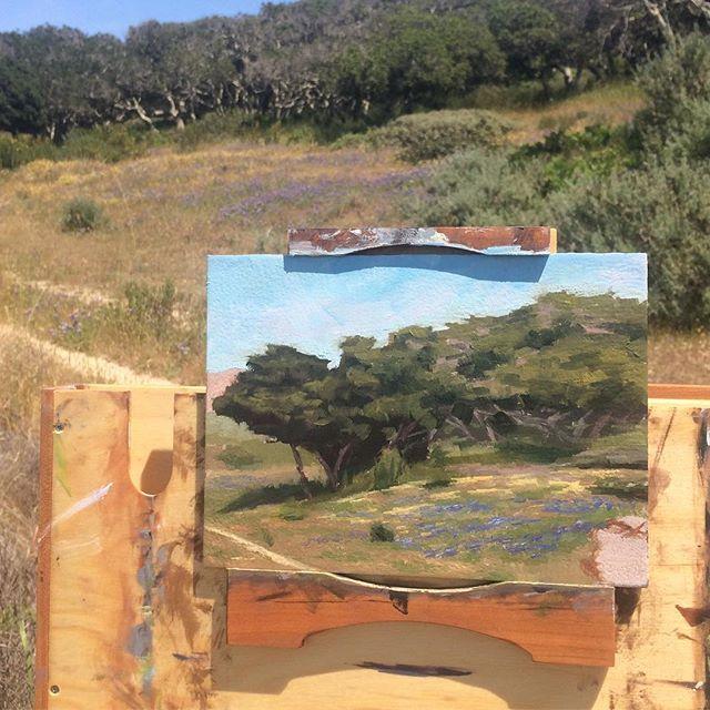 Found some lupins today. #pleinair #oilonpanel #oilpainting #landscape #landscapepainting #allaprima #representationalart #realism #spring #wildflowers #lupins #fortord #marinalocals #montereybaylocals - posted by Bryce Elischer https://www.instagram.com/bryceelischer - See more of Marina, CA at http://marinalocals.com