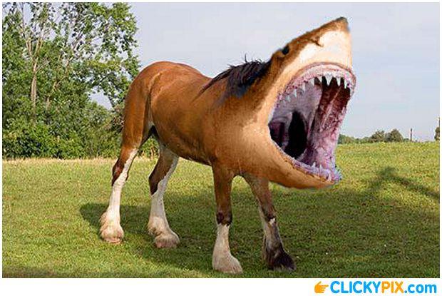 Half shark half horse - photo#16