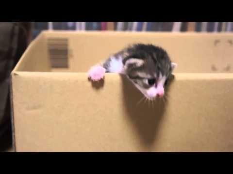 Animales Chistosos Gatito Lograra Escaparse  Videos De Gatos Chistosos - http://otrascosasvirales.com/animales-chistosos-gatito-lograra-escaparse-videos-de-gatos-chistosos/
